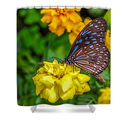 Butterfly On Yellow Marigold Shower Curtain