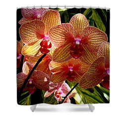 Shower Curtain featuring the photograph Butterfly Orchids by Rodney Lee Williams