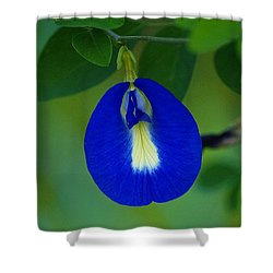 Shower Curtain featuring the photograph Butterfly Pea by Blair Wainman