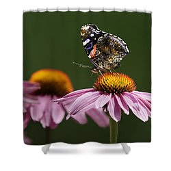 Shower Curtain featuring the photograph Butterfly Red Admiral On Echinacea by Peter v Quenter