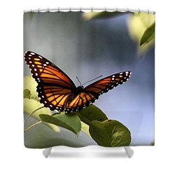 Butterfly -  Soaking Up The Sun Shower Curtain