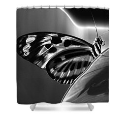 Butterfly Solarized Shower Curtain by Ron White