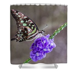 Butterfly - Tailed Jay I Shower Curtain