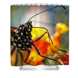 Butterfly Tongue Squared Shower Curtain by TK Goforth