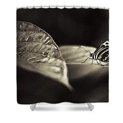 Butterfly Warm Tone Shower Curtain