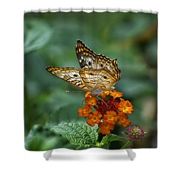 Shower Curtain featuring the photograph Butterfly Wings Of Sun Light by Thomas Woolworth