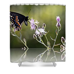 Shower Curtain featuring the photograph Butterfly With Reflection by Eleanor Abramson