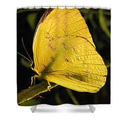 Butterscotch Shower Curtain