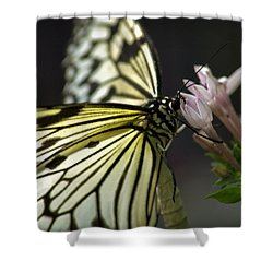 Butteryfly Shower Curtain