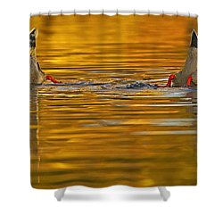 Butts Shower Curtain