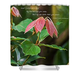 Shower Curtain featuring the photograph By The Seeds That You Plant by Jordan Blackstone