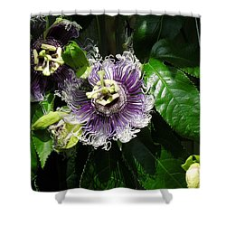 Shower Curtain featuring the photograph Byron Beauty by Ron Davidson