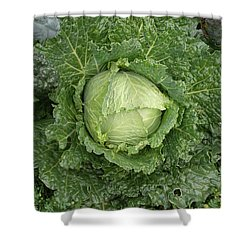 Cabbage And Marigolds Shower Curtain