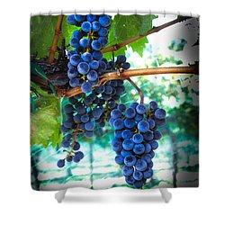 Cabernet Sauvignon Grapes Shower Curtain by Robert Bales