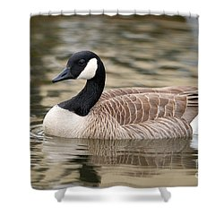 Cackling Goose Shower Curtain