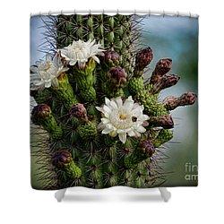 Cacti Bouquet  Shower Curtain