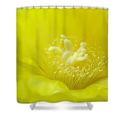 Cactus Dance Shower Curtain by Bill Morgenstern