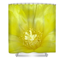 Cactus Dance II Shower Curtain by Bill Morgenstern
