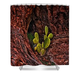 Cactus Dwelling Shower Curtain by Mark Myhaver