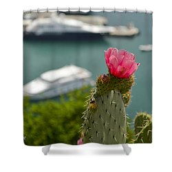 Cactus Flower Above The Port Of Nice Shower Curtain by Allen Sheffield