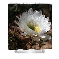 Cactus Flower Full Bloom Shower Curtain by Tom Janca