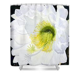Cactus Flower II Shower Curtain by Mike Robles