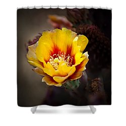 Cactus Flower Shower Curtain by Swift Family