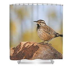 Cactus Wren On Rock Shower Curtain by Bryan Keil