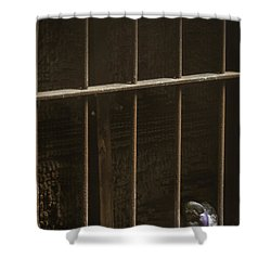 Caged Shower Curtain by Margie Hurwich