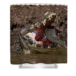 Caiman Vs Catfish 1 Shower Curtain