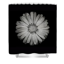 Shower Curtain featuring the photograph Calendula Flower - Textured Version by Laura Melis