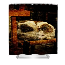 Calico Shower Curtain by Lois Bryan