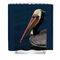 Shower Curtain featuring the photograph California Brown Pelican Portrait by Ram Vasudev