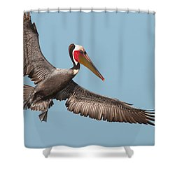 Shower Curtain featuring the photograph California Brown Pelican With Stretched Wings by Ram Vasudev
