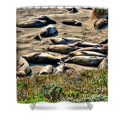 Shower Curtain featuring the photograph California Dreaming by Jim Carrell