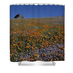 California Gold Poppies And Baby Blue Eyes Shower Curtain by Susan Rovira