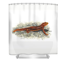 California Newt Shower Curtain by Cindy Hitchcock