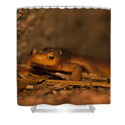 California Newt Shower Curtain by Ron Sanford