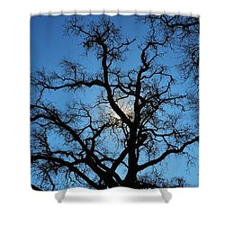 California Oak Sun Tree Shower Curtain