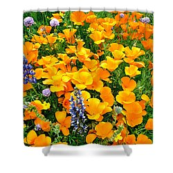 California Poppies And Betham Lupines Southern California Shower Curtain by Dave Welling