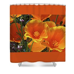 California Poppies Shower Curtain by Ben and Raisa Gertsberg
