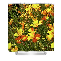 California Poppies Shower Curtain by Ed  Riche