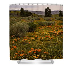 California Poppies In The Antelope Valley Shower Curtain