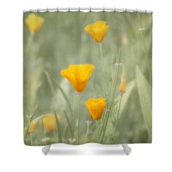 California Poppies Shower Curtain by Kim Hojnacki