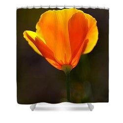 California Poppy 2 Shower Curtain by Robert Woodward