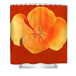 California Poppy Painting Shower Curtain by Bob and Nadine Johnston