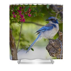 California  Scrub Jay Shower Curtain