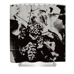 California Vineyard Shower Curtain by Linda Shafer