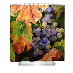 California Vineyards Shower Curtain
