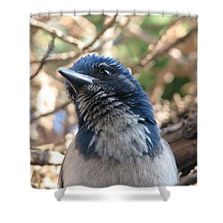 California Western Scrub Jay Shower Curtain by Patricia Barmatz